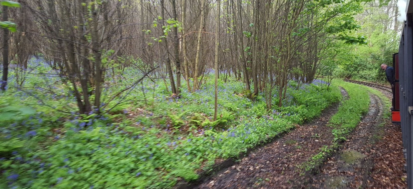 Hollycombe's Bluebell woods from the Quarry Railway